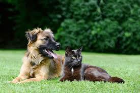 Professional care for cats and dogs