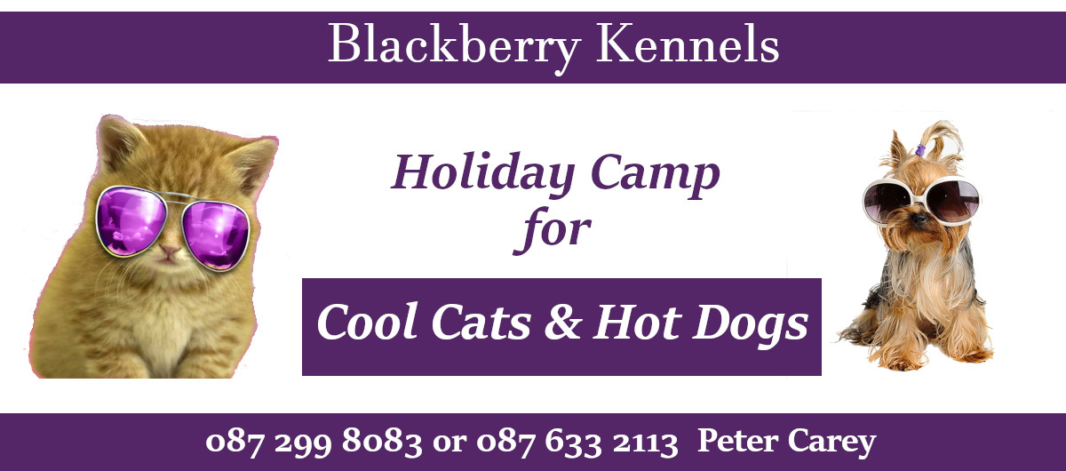 Holiday Camp for Cool Cats and Hot Dogs